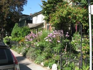 Gardens along Spruce Street